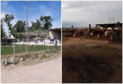 Acțiune de identificare amenajărilor agricole și zootehnice din UAT Arad care funcționează ilegal