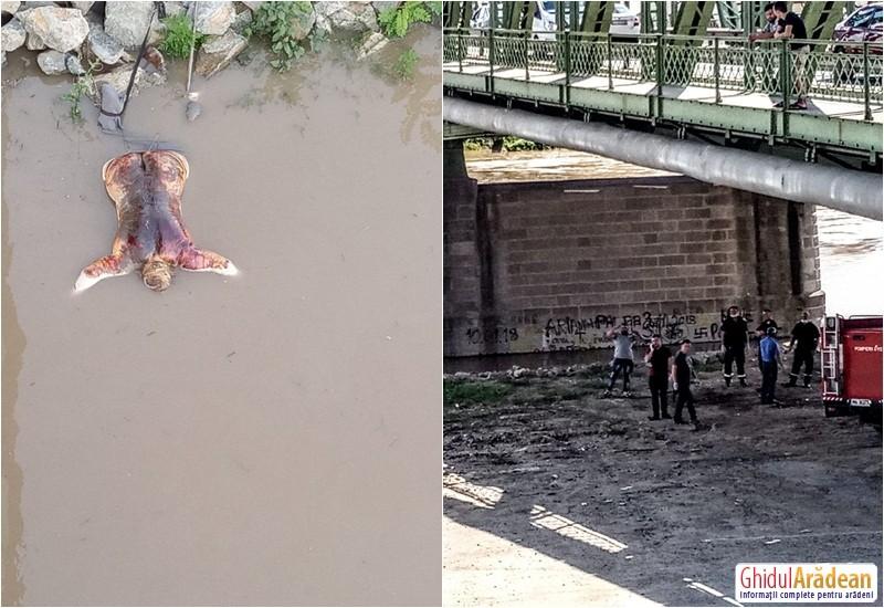 Cadavru recuperat din Mureş în Zona Podului din Aradul Nou