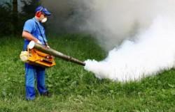 De azi începe combaterea tânțarilor în municipiul Arad