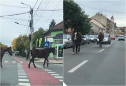 S-au plimbat nestingheriţi prin oraş…la pas, ca într-o plimbare pe Corso