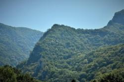 O nouă șansă pentru recuperarea în patrimoniul statului a celor 43.227 hectare de pădure retrocedate ilegal