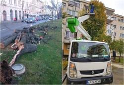 Din 12 ianuarie se reia acțiunea de toaletare a arborilor din municipiu