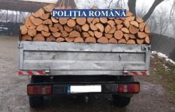 Lemn de contrabandă la Macea