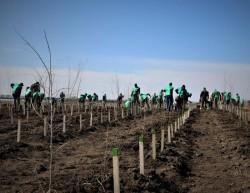 Fiecare român va avea un copac. Romsilva va planta circa 20 milioane de puieți forestieri în campania de împăduriri de primăvară