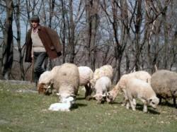 Scene de coșmar trăite de către doi soți din Lipova. Un cioban a intrat peste ei în gospodărie și i-a amenințat cu un cuțit