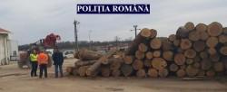 Controale la firmele care comercializează lemne. Peste 100 mc de lemn confiscat