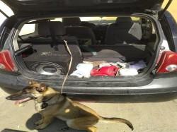 Cățelandru abandonat într-o mașină. Mașina, abandonată și ea. Nu se cunoaște încă  proprietarul…nici al câinelui, nici a mașinii