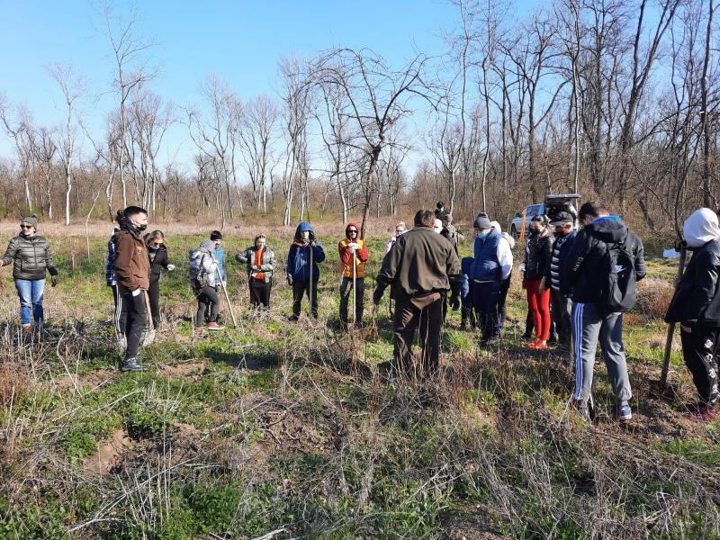 200 puieți de păr au plantat membrii clubului Rotary Arad Cetate la Pădurea Ceala