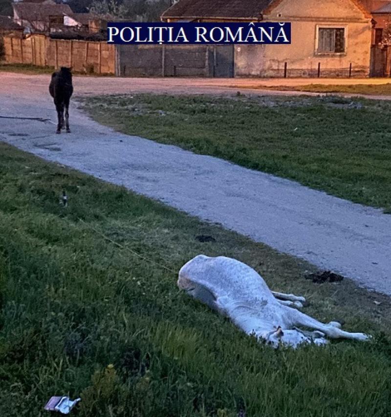 Doi cai bolnavi și abandonați pe o stradă din Arad au fost salvați în ultimul moment de Poliția Animalelor. Proprietarul este căutat pentru a da socoteală