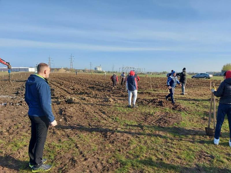În frunte cu primarul și vicele, angajații Primăriei Vladimirescu au plantat sâmbătă 4.000 puieți de stejar