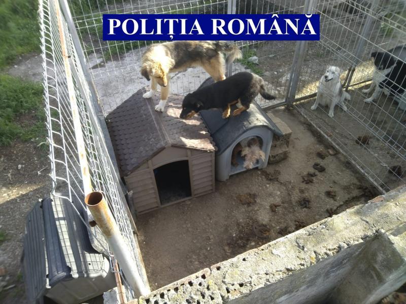 25 de câini METIȘ aflați în stare de pericol la Șiria au fost salvați de polițiștii de la Protecția Animalelor