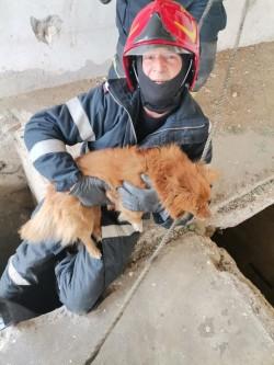 Un câine căzut înr-un canal a fost salvat și adoptat de pompierii din Vladimirescu