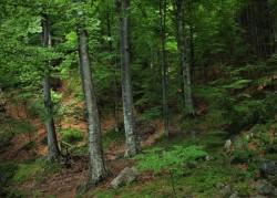 Romsilva lansează prima ediție a Catalogului de prezentare a sortimentelor de lemn fasonat