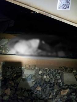 Bărbat dispărut de la domiciliu omorât de un marfar la Glogovăț