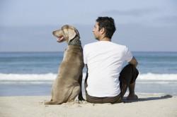 Românii riscă amenzi de 10.000 de lei dacă nu strâng fecalele animalelor de companie de pe plajă