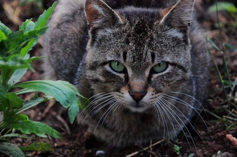 A omorât o pisică cu sapa pentru că i-a creat deranj în grădină. Făptașul este acum cercetat penal pentru ucidere