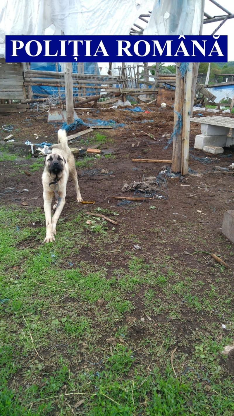 Câini periculoși ținuți în condiții neadecvate de  către propietari. Acțiune pe linie de prevenire și combatere a actelor de cruzime față de animale
