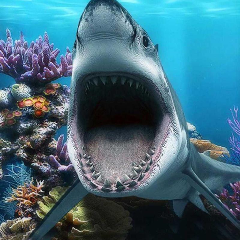 În timp ce rechinii stau ascunși, peștișorii pică în năvod