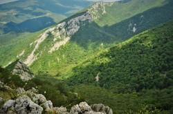Incredibil, dar adevărat. 43.000 hectare de pădure din județul Bacău retrocedate ilegal. Judecătorii Curții de Apel Brașov încep dezbaterile în dosar