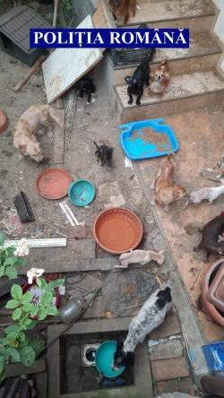38 de câini și 9 pisici salvați de polițiștii Biroului Animalelor
