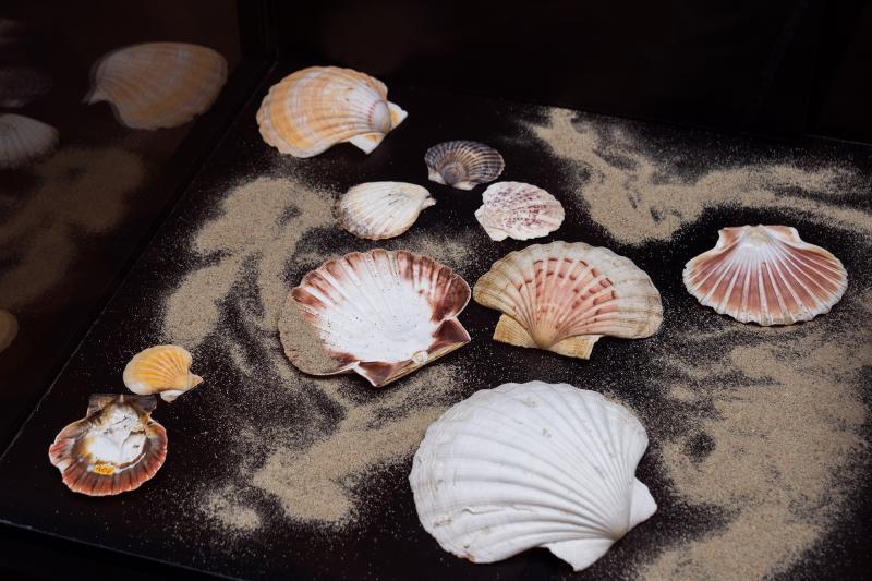 Forme și culori în lumea moluștelor la Muzeul de Științe ale Naturii