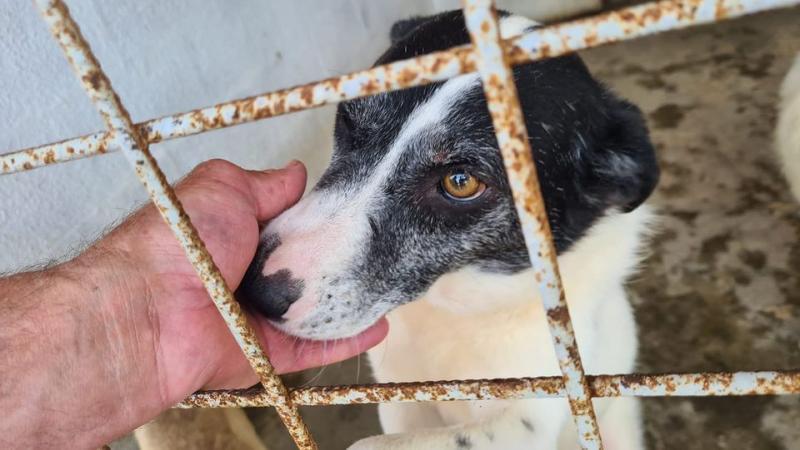 Expoziție canină cu adopție la finele acestei săptămâni