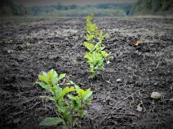 Romsilva a plantat aproape 22 milioane puieți forestieri în fondul forestier de stat în campania de împăduriri de primăvară