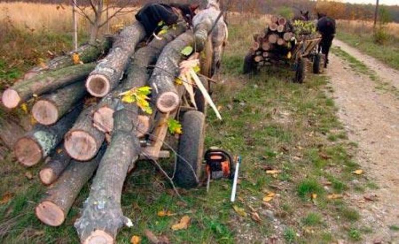 Trei bărbați au fost prinși în flagrant delict, în timp ce tăiau arbori nemarcați