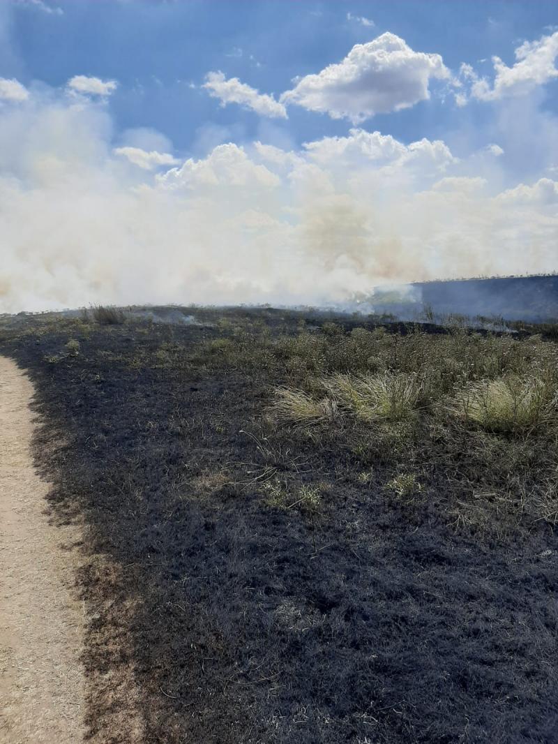 Incendiu de vegetație la Sânicolaul Mic