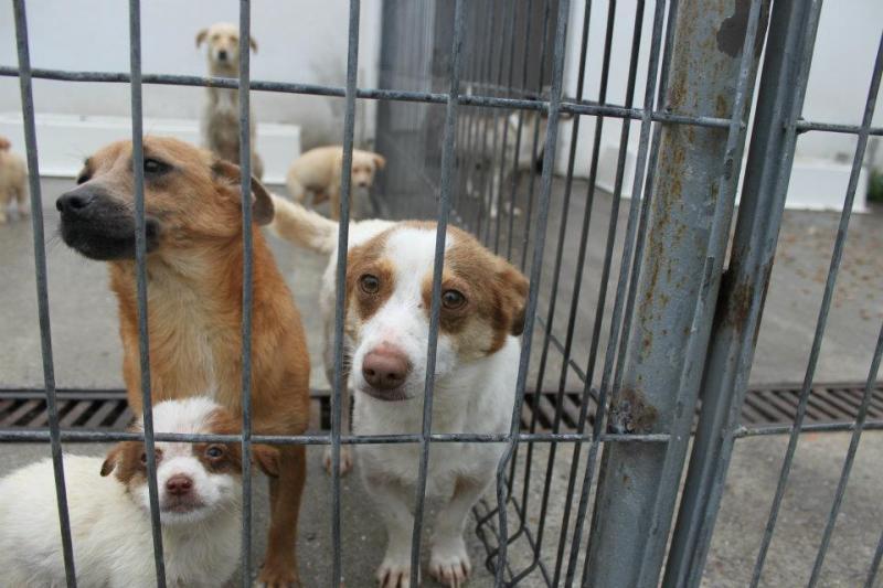 Patru câini aflați în pericol la Gurba au fost predați asociației Paws United din Zăbrani. Proprietara lor s-a ales cu o amendă uriașă de 18.000 de lei