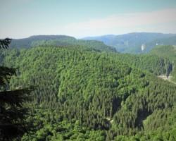 Romsilva adoptă măsuri suplimentare pentru prevenirea și stingerea incendiilor în fondul forestier