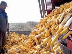 Investiție de 5,7 milioane euro a traderului arădean de cereale RDF pentru extinderea capacităţii de depozitare, tehnologie şi utilaje