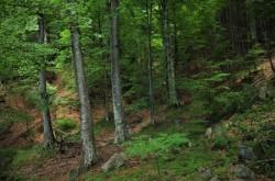 Peste două mii de hectare de păduri de stat administrate de Romsilva au fost incluse în Catalogul Național al Pădurilor Virgine și Cvasivirgine