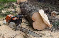 Amendați cu 5.000 de lei pentru că au fost depistați cu material lemnos