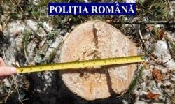 Un bărbat din Gurahonț a tăiat 5 copaci ilegal și a plecat acasă cu ei